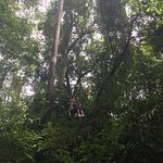 Gliding through the rainforest canopy on the Eco Tram at Hacienda Baru