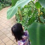 雨の日や寒い日など、非現実感が味わえてこどもからお年寄りまで楽しめます。 娘は、ジャングルを探検しているようで滝の下を通るトンネルを何度も行ったり来たり楽しんでいました。 熱帯の大きく成長した