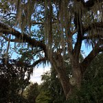 centuries-old live oak trees laden with Spanish moss