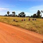 Phnom Penh rice field