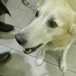 Il mio cane Miele, mi sta adorando, ma solo un pochino di cialda gli è stato permesso