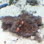 Photo de Okinawa Churaumi Aquarium