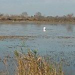 Photo of Camargue Nature Park