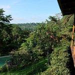 Vue depuis la terrasse du restaurant sur la piscine et la forêt