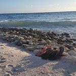 Photo of Santa Barbara Beach & Golf Resort, Curacao