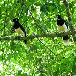 Aves que encontramos en el recorrido hacia la garganta