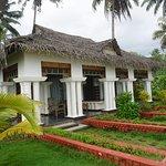 Palm Tree Heritage Foto