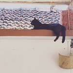 Didi the sweetest black cat