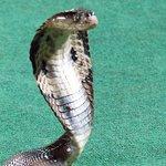 Samui Snake Farm Foto