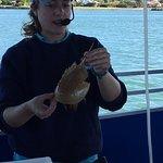 Tanya and the horseshoe crab