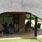 Family of Nyala