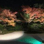 秋の夜間拝観でライトアップされた庭園
