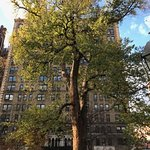 "Oldest Elm tree in New York - ""Hangman's Elm"""