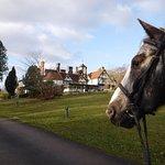Bob the horse on a short break