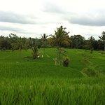 Photo of Bali Bintang Bike Tours
