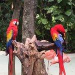 Xcaret Eco Theme Park Foto