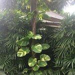 Naiharn Villa Garden Foto