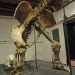 Restos fósiles de un perezozo