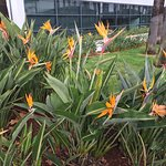 Birds of Paradise borders!