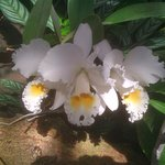 Some of the orchids in the logo parquet Tenerife