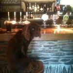 Rufio enjoying the Tower Inn bar before it gets busy.