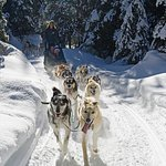 Guest have the opportunity to take control of the Dog Sled!