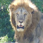Photo of Kenya Incentive Tours & Safaris - Day Tours