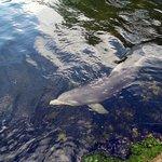 Dolphins Plus - Key Largo Foto