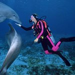 SWIM OR DIVE WITH THE DOLPHINS