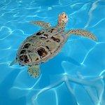 Turtle in rehab