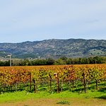 Robert Biale Vineyards Foto