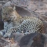 Photo de Umlani Bushcamp