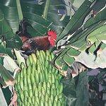 in der Bananenplantage gefaellt es nicht nur uns!