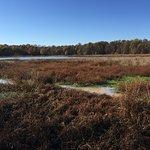 Wetlands in November