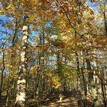 Woods in November