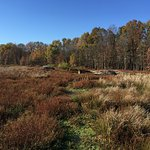 Beautiful fall colors with beaver lodge in distance