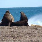 Zona de playa. Colonia de elefantes marinos y lobos marinos