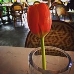 A fresh tulip on every table
