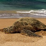 Photo de Hale Mahina Beach Resort