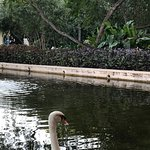 Swan at Del Mar (they have flamingos and all sorts of wildlife).