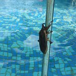 bug in water park,