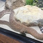 Orange County Zoo Foto