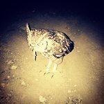 Photo de Shayamoya Tiger Fishing & Game Lodge