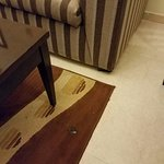 Dirty, stained carpet in room