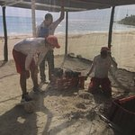 Life Guards digging for sea turtles that have just hatched