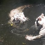 Photo of Singapore Zoo