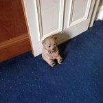 cute doorstop