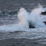 Zdjęcie Whale Cove Inn