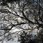 Foto de Eumarella Shores Noosa Lake Retreat