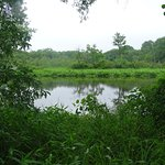 View of Rancocas Creek and Wetlands, Summer